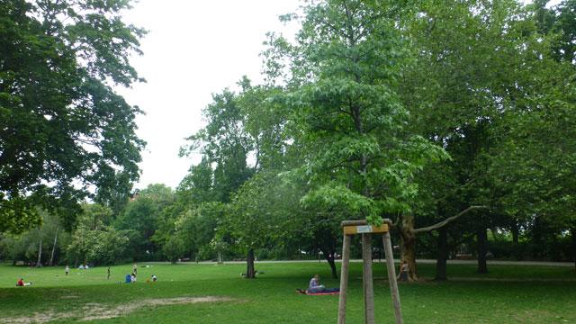 Baum und Bank für Volkspark
